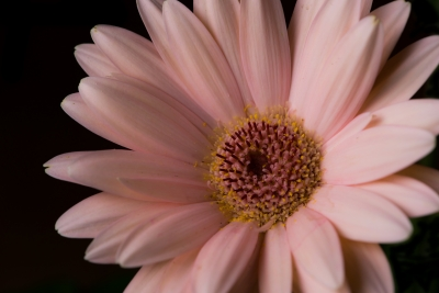 Pink And Pollen