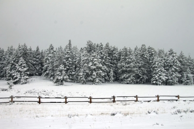 May Snowstorm In Mountains