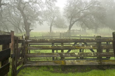 Old Febce In Fog