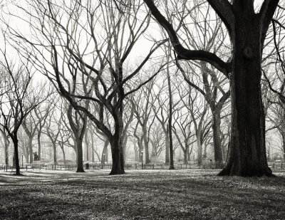 Morning Light – Central Park