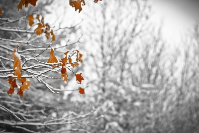 Orange Leaves In Winter