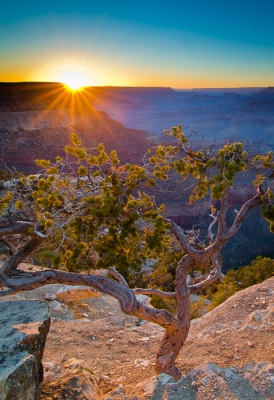 Last Rays On Yavapai Point, Grand Canyon, Az
