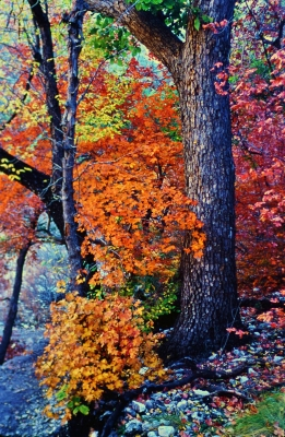 Fall Color-texas!