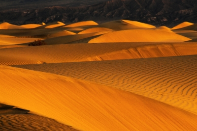 Patterns In The Dunes
