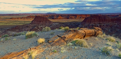 Petrified Log In The Painted Desert