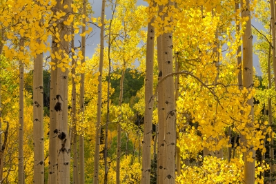 Colorado Fall Color 1