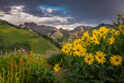 Floweres Of  Albion Basin