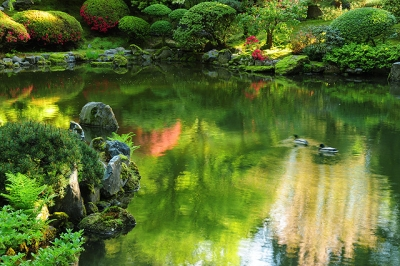 Spring Time In The Portland Japanese Garden