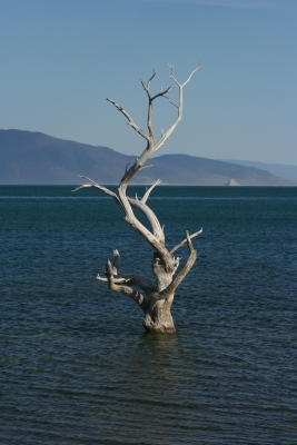 Pyramid Lake Tree