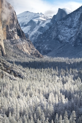 Frosted Trees, Tunnel View
