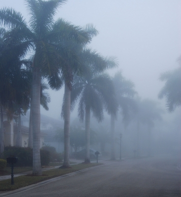 Royal Palms Fogged