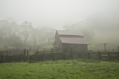 Old Barn In Fog