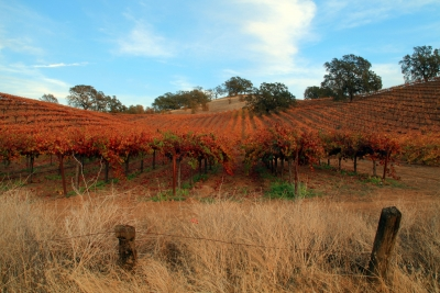 Color In The Vineyard