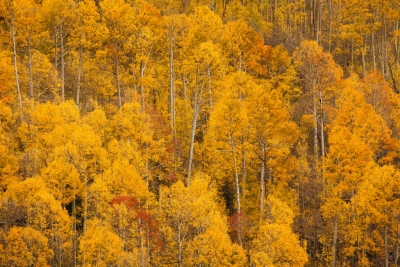 Colorado Fall Color 3