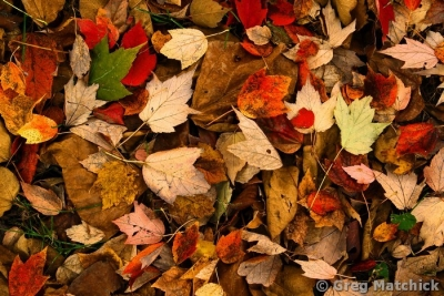 Autumn Leaves Must Fall