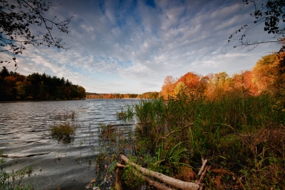 Fall, Reservoir, Trees, Log, Sky, Hdr
