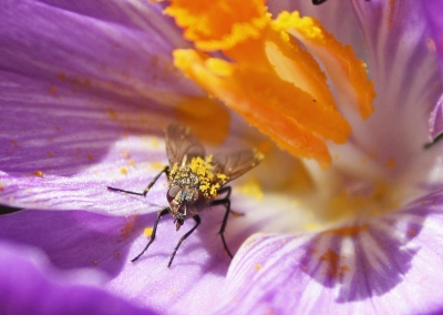 The Unexpected Pollinator