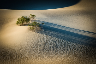 Life On The Dunes