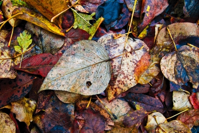 Autumn Floor Covering