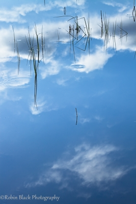 Grass Reflection, Morro Bay