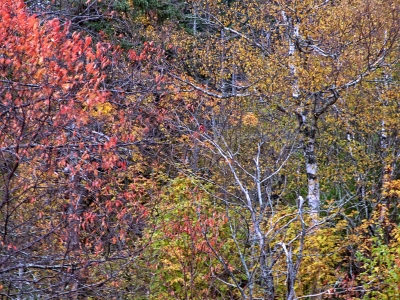 The Rustle Of Fall Leaves