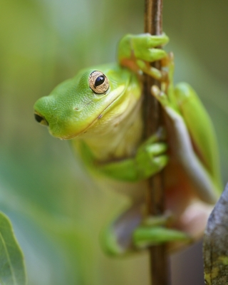 This Frog Is Checking Me Out