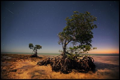 Meteor And Mangroves