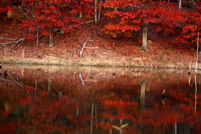 Red Autumn In November