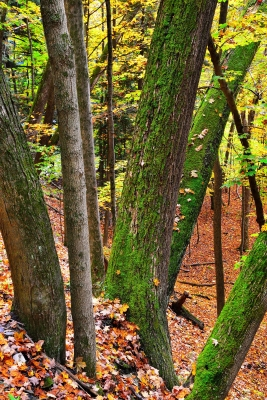 Mossy Trees Of Letchworth