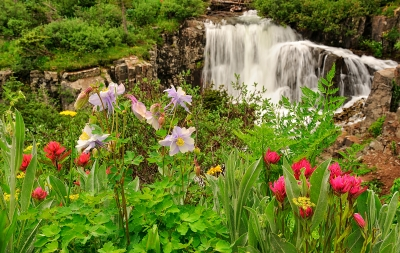 Twin Falls Wildflowers