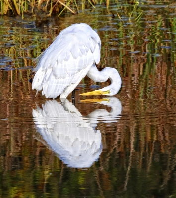 Egret Reflections Or It's Nice To Have Patience