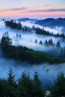 The Summer World Of Mount Tam