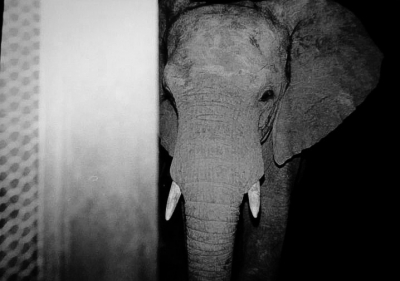 Elephant By The Back Door