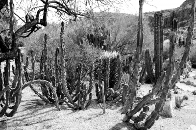 The Land Of Cacti