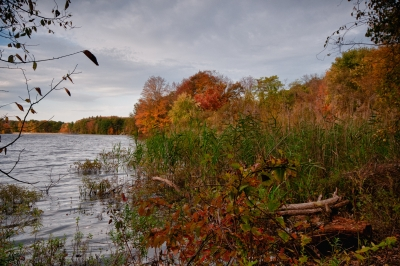 Fall, Log, Reeds, Trees, Sky, Hdr