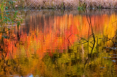 The Swamp In The Fall