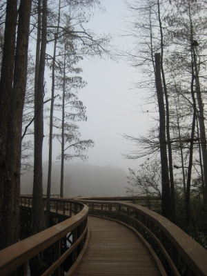 Path To Fog2
