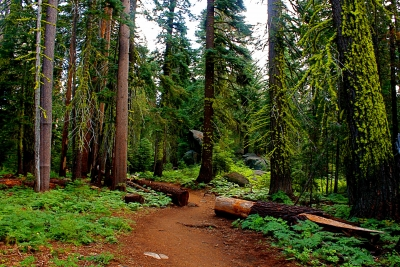 Trail To Taft Point