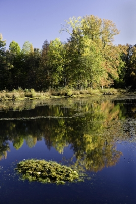 Fall Colors, North Tract Patuxent River Nwr