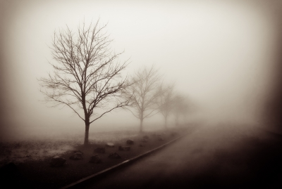 Tree Line In Fog