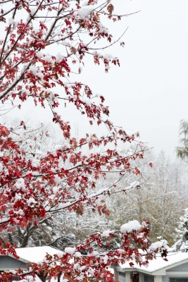 First Snow At River Knoll