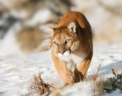 On The Prowl