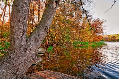 Fall, Tree, Leaves, Reservoir, Sky, Hdr