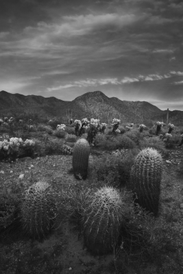 Sonoran Candles