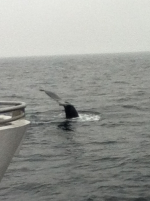 Whale Sighting