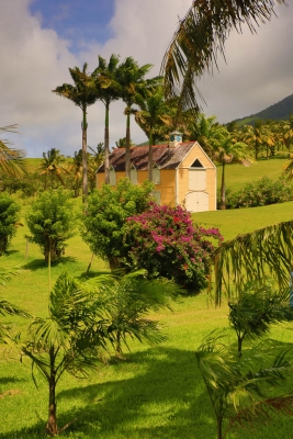 Yellow Caribbean Barn Surrounded By Palms