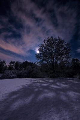 Moonlight And Fresh Snow