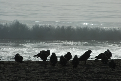 Gulls And Breakers