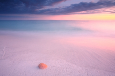 Shell On The Gulf Shore