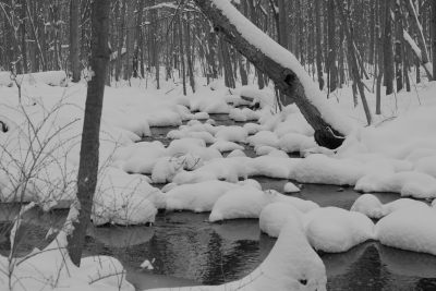 Winter Stepping Stones